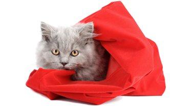Le droit d'auteur est un chat dans un sac